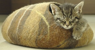 Top-10-Most-Gifted-Cat-Beds
