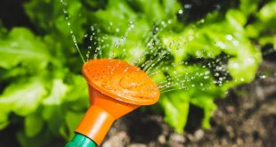 Top 10 Best Sellers in Watering Cans